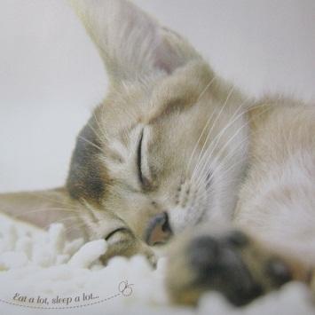 IMG_20121003-TOPにゃんこ♪.jpg
