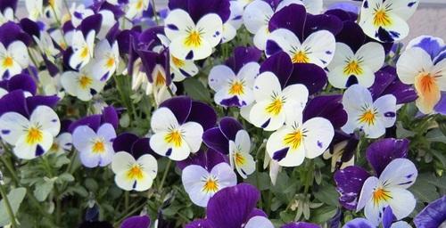 IMG_20130503-002お花♪.jpg