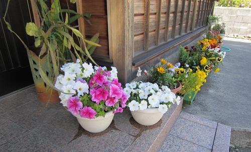 IMG_20140522-010実家のお花さん♪.jpg