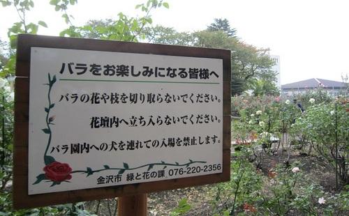 IMG_20141017-002バラ園♪.jpg