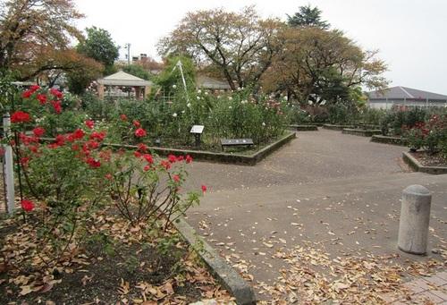 IMG_20141031-003バラ園♪.jpg
