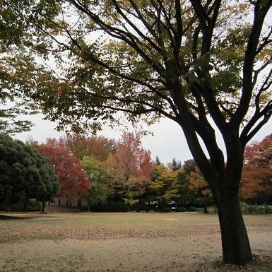 IMG_20141031-TOPバラ園♪.jpg