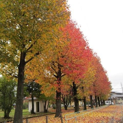 IMG_20141102-TOP紅葉♪.jpg