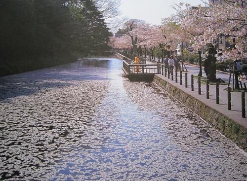 IMG_20120414-002金澤♪.jpg