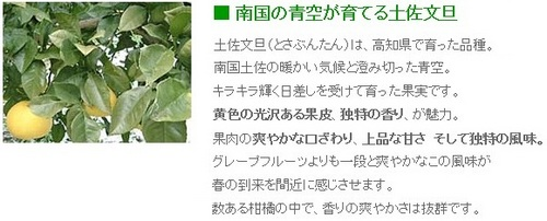 ss20130307-001土佐文旦♪.jpg
