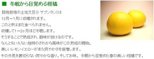 ss20130307-002土佐文旦♪.jpg